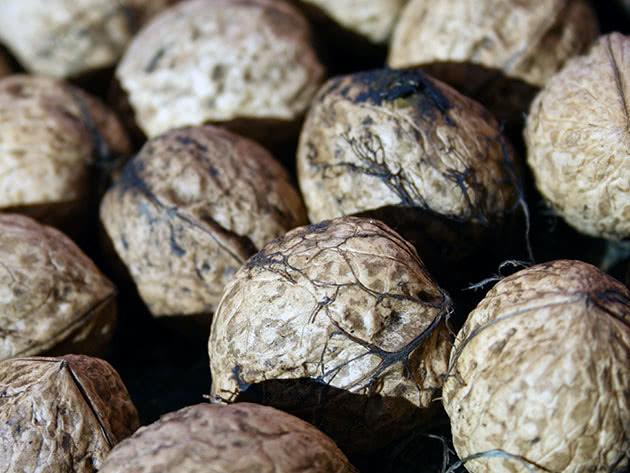 Грецкий орех после сбора урожая
