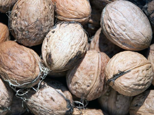 Правильное выращивание грецкого ореха