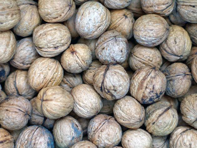 Условия выращивания грецкого ореха
