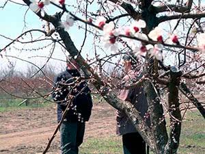 Догляд за деревами навесні