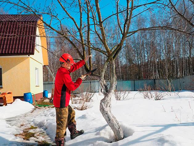 Обрізування дерев