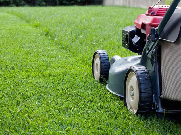 Косим траву на газоне