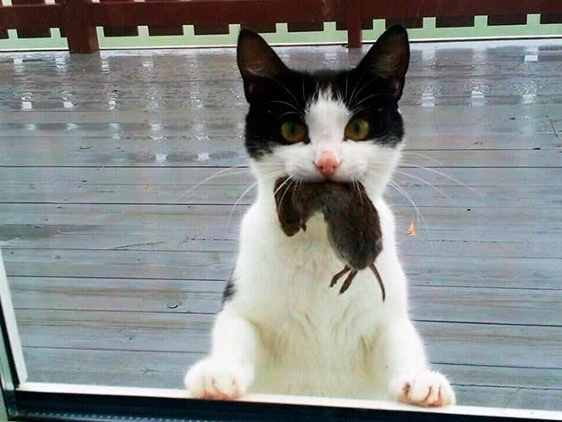 Кот впіймав мишу