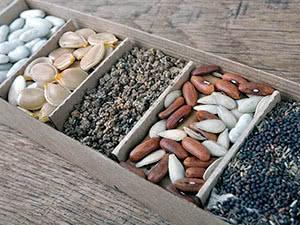 Зберігання насіння