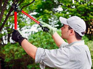Літнє обрізування дерев і кущів