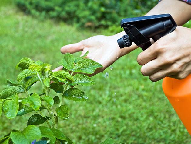 Обприскування рослин розчином мила