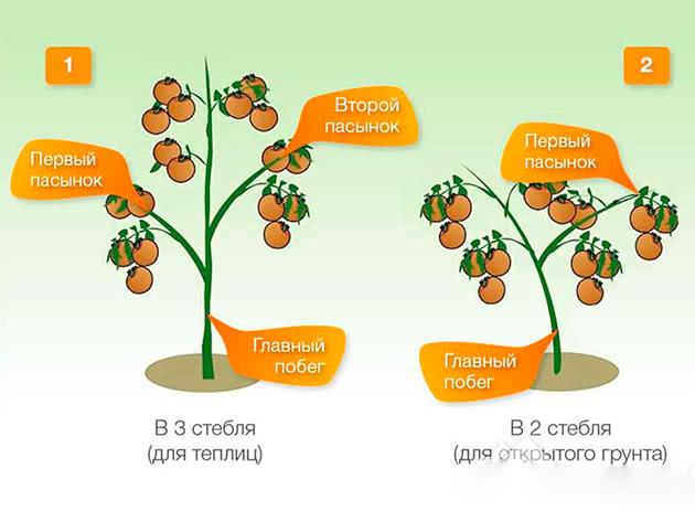 Схема обрізки пасинків томатів