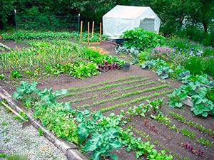 Роботи в саду в червні – що можна робити