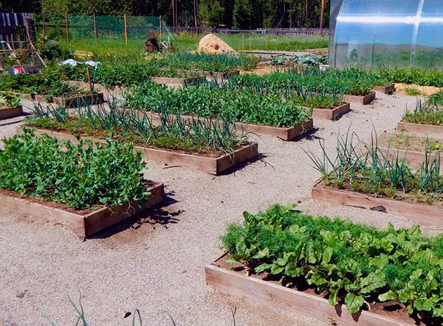 Обустройство овощных грядок
