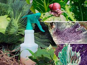 Защита растений без химикатов