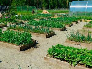 Помилки при вирощуванні овочів