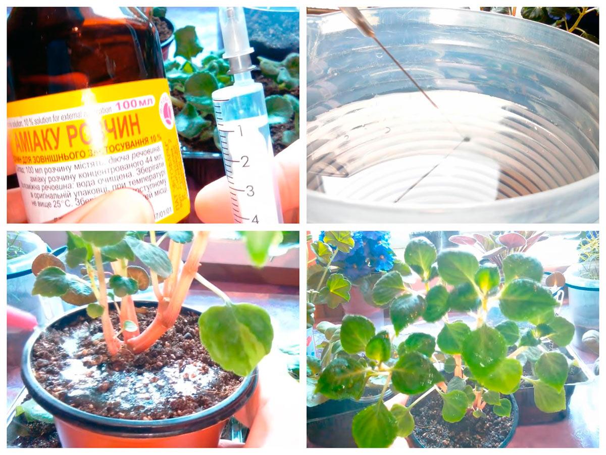 Применение нашатырного спирта для полива и опрыскивания растений
