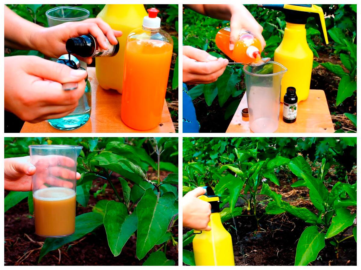 Обработка баклажанов от колорадского жука