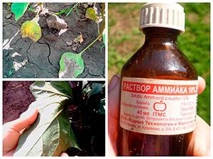 Причины пожелтения листьев баклажанов