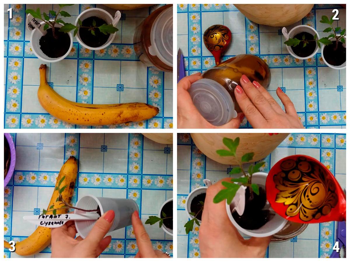 Как скарифицировать семена эхинацеи перед посевом