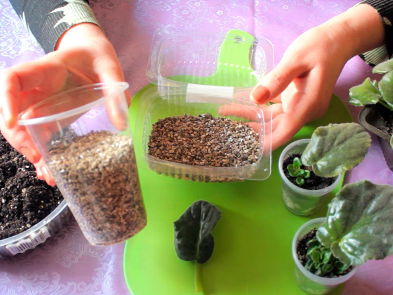 Подготовка грунта для черенкования фиалок
