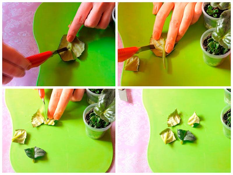Как разрезать лист фиалки на черенки