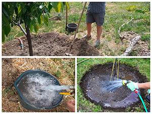 Полив деревьев в саду летом