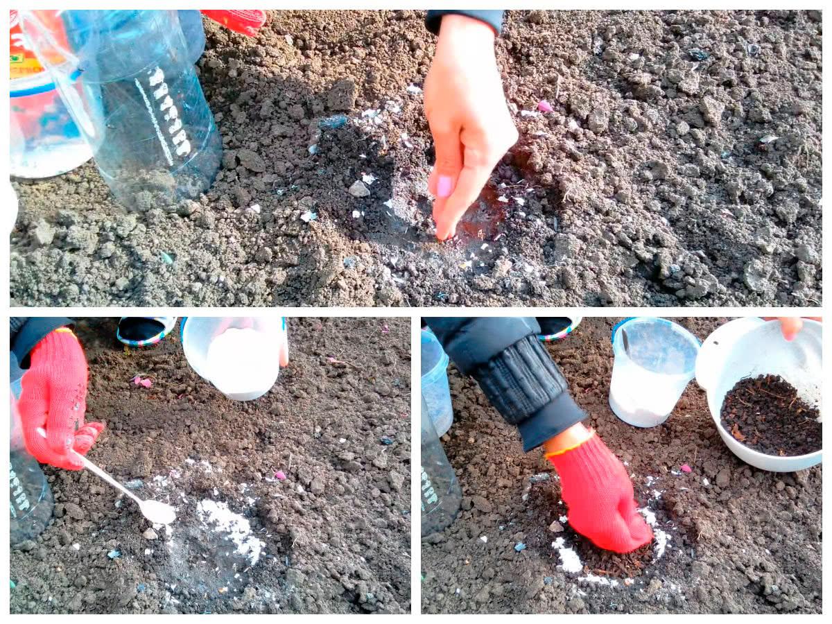 Подготовка лунки к посадке капусты