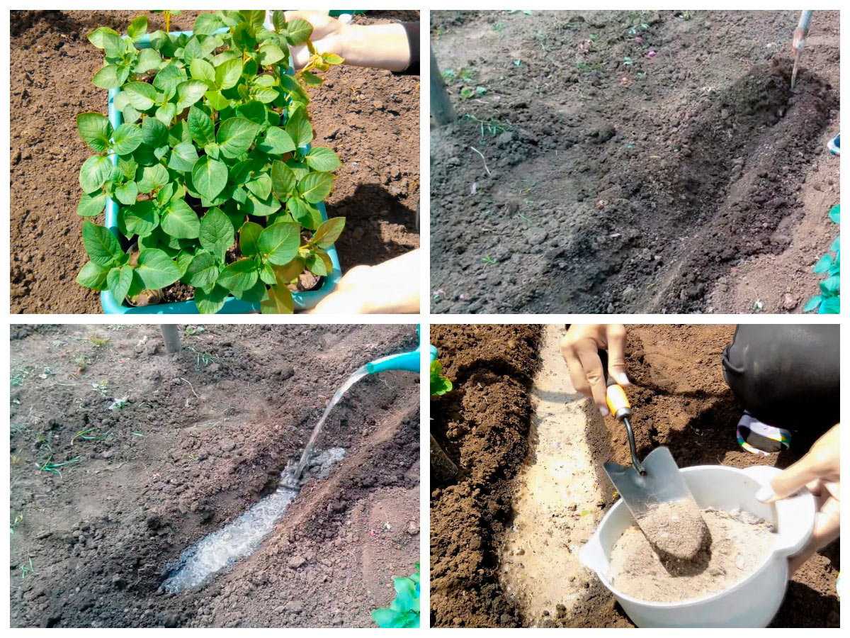 Подготовка лунок для посадки картофеля