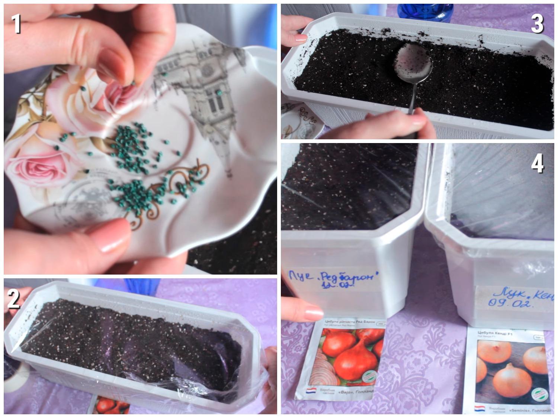 Процесс посева лука на рассаду