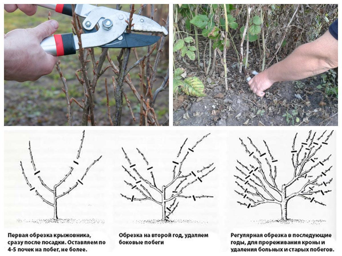 Как обрезать кустарники