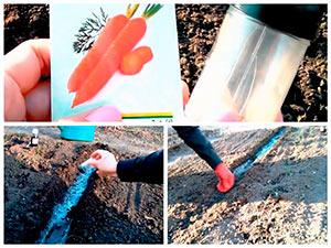 Посев семян моркови в грунт