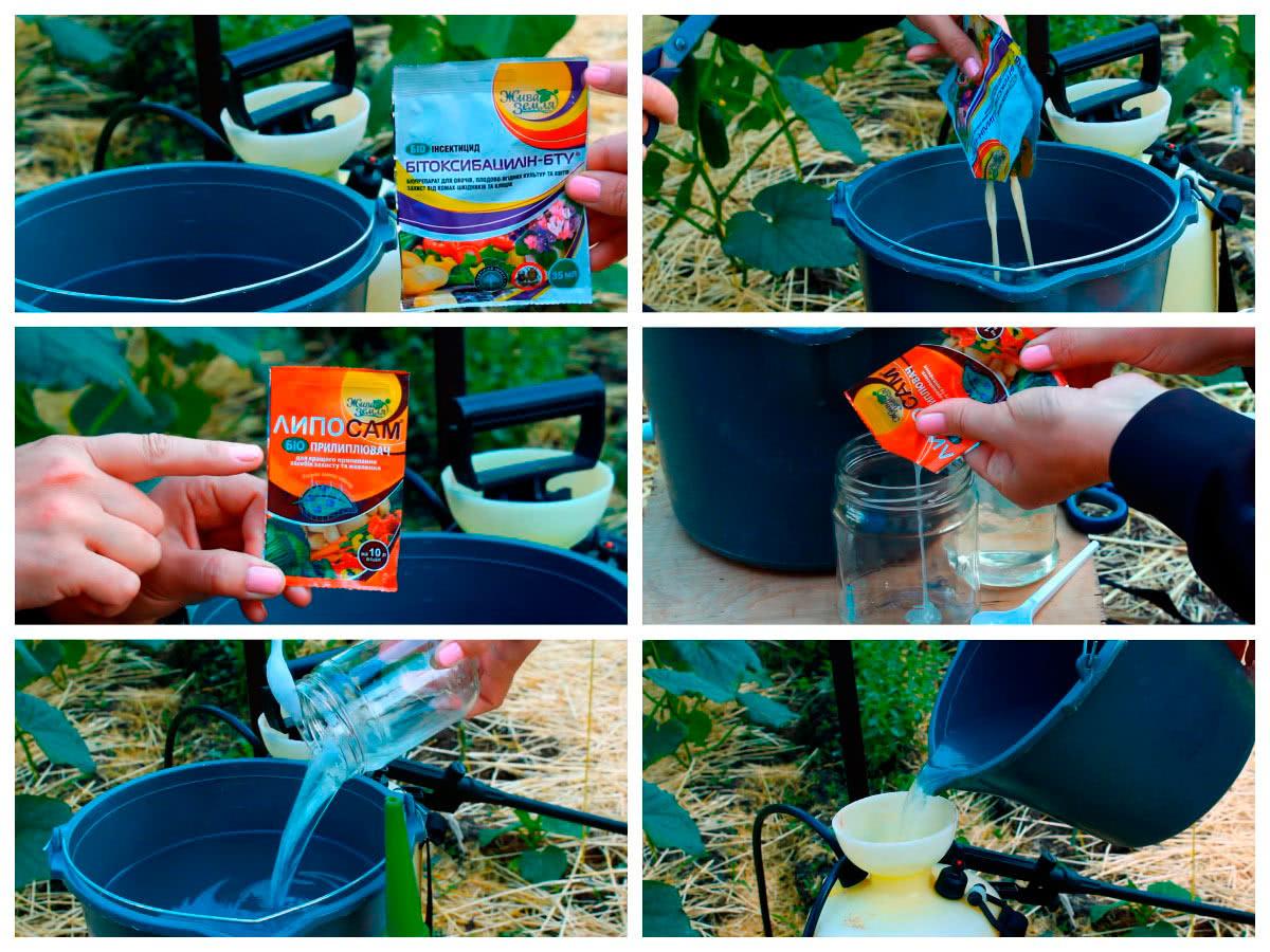 Приготовление раствора для обработки огурцов