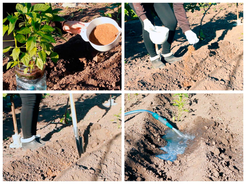 Подготовка участка для посадки перца