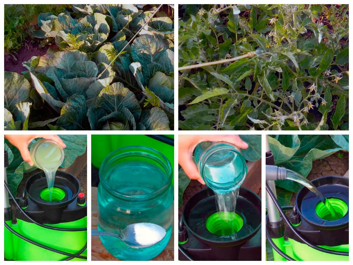 Подкормка растений бором и сывороткой