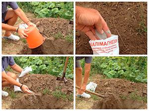 Готовим посадочную яму