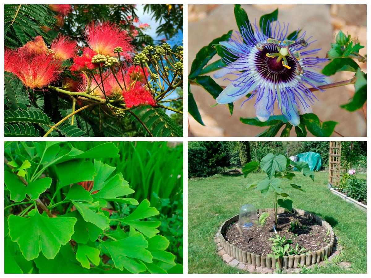 Посадка растений летом