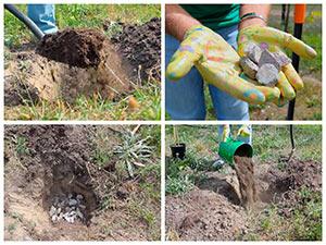 Подготовка ямы для посадки саженца