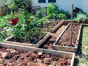 Что можно сажать в июле на огороде