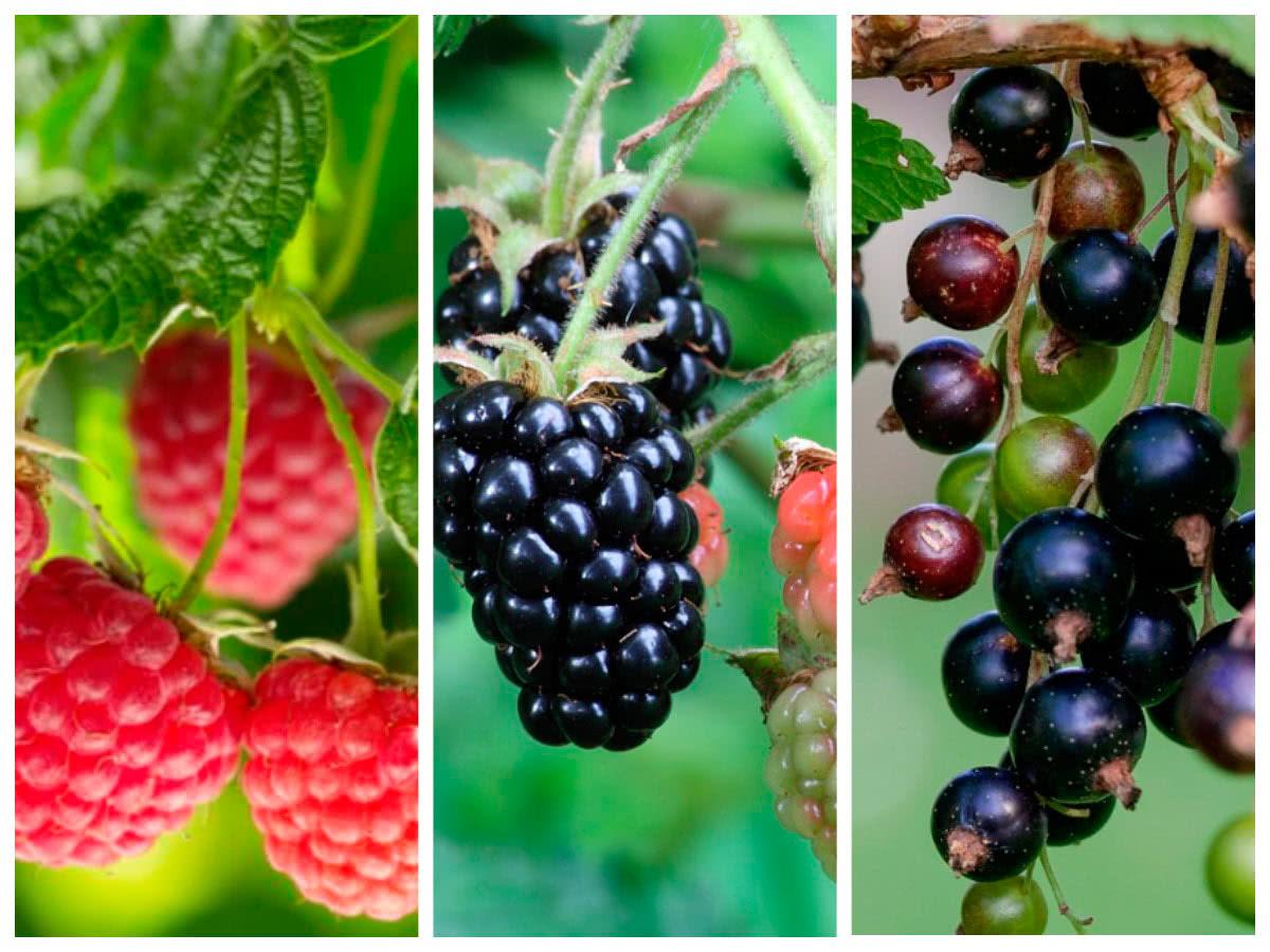 Работы с плодовыми кустарниками