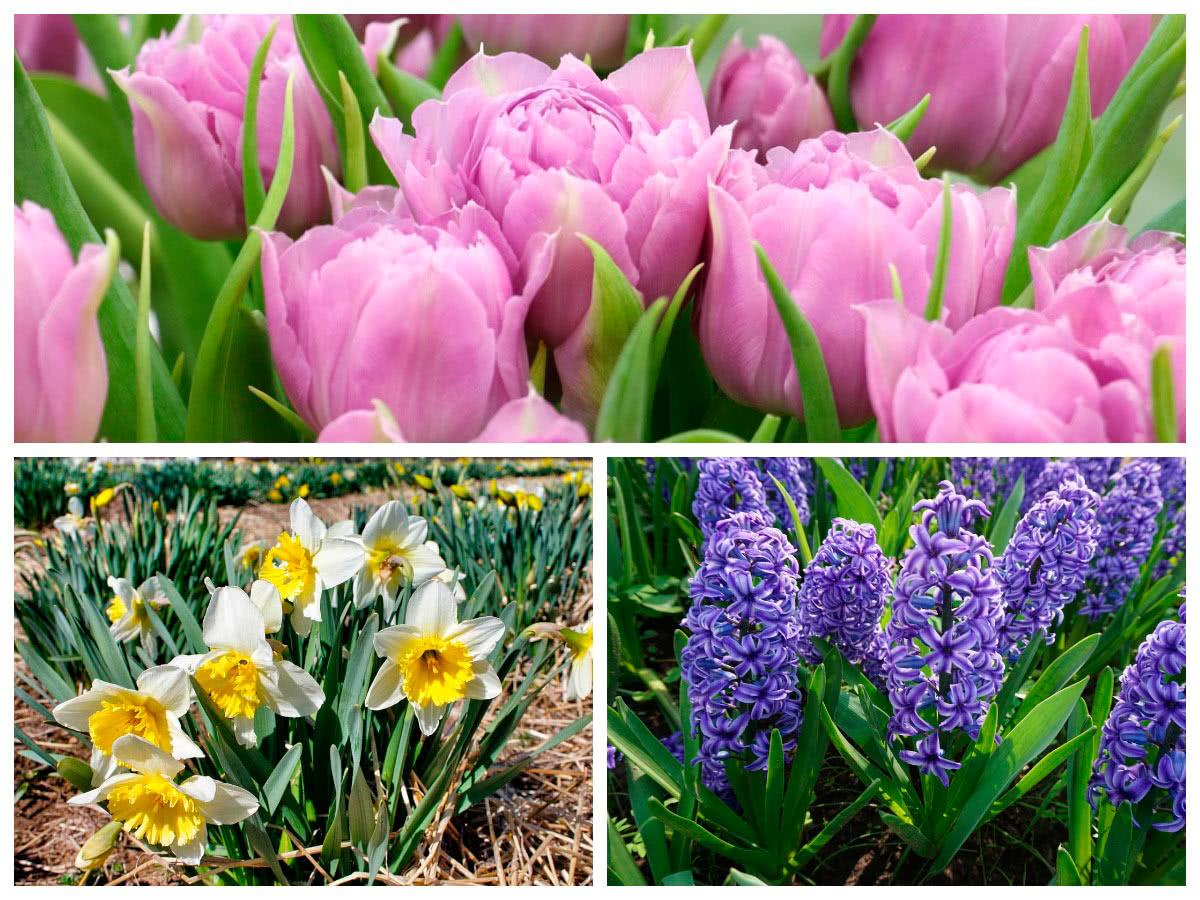 Работы с цветущими садовыми цветами