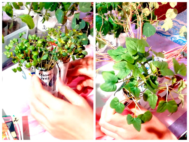 Рассада цветов в самокрутках