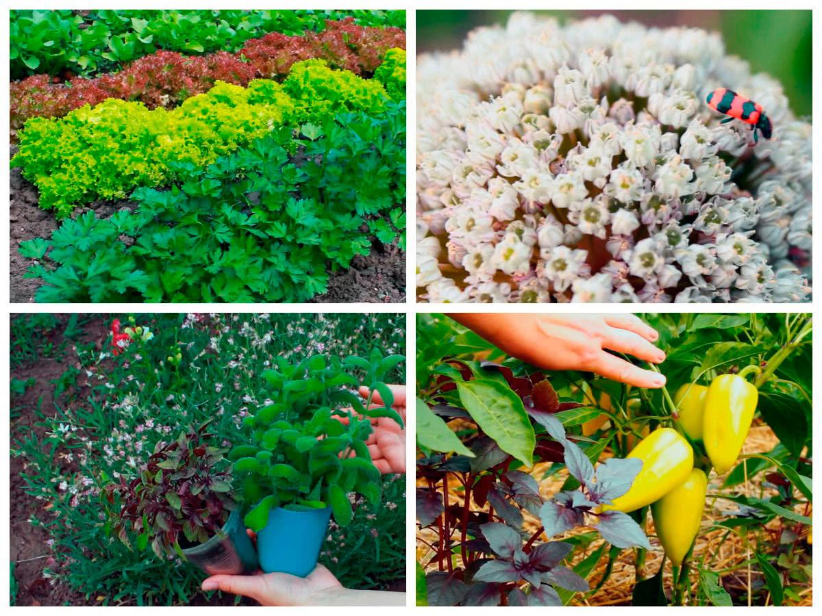 Растения защитники