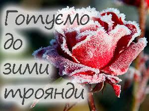 Підготовка троянд до зимового зберігання