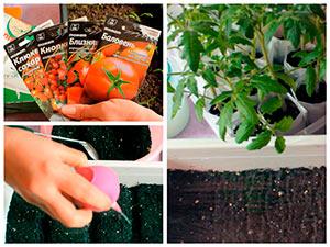 Предпосевная обрабокта семян томатов