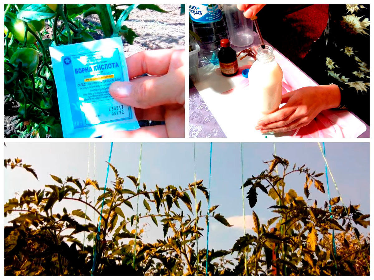 Подкормка и подвязывание кустов помидоров