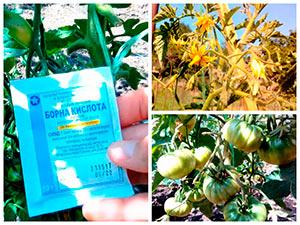 Обработка томатов борной кислотой