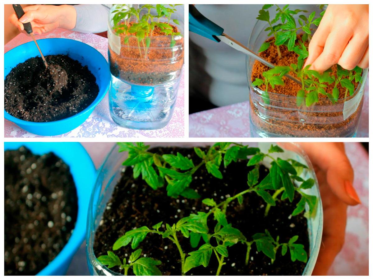 Подсыпаем грунт под рассаду томатов на фитиле