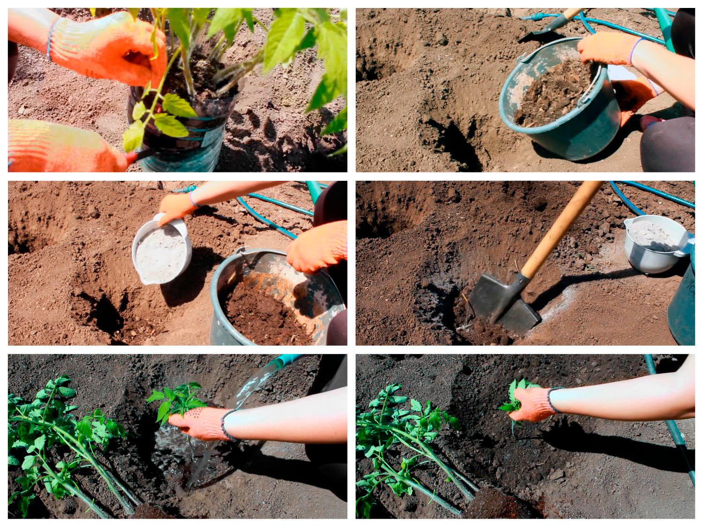 Как высаживать помидоры с открытой корневой системой