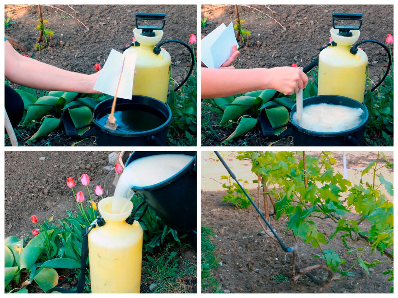 Обработка винограда весной по листьям