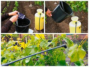 Работы с виноградом весной