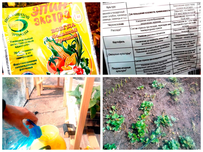 Обработка плодовых растений после заморозков