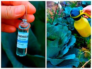 Витаминное удобрение для растений