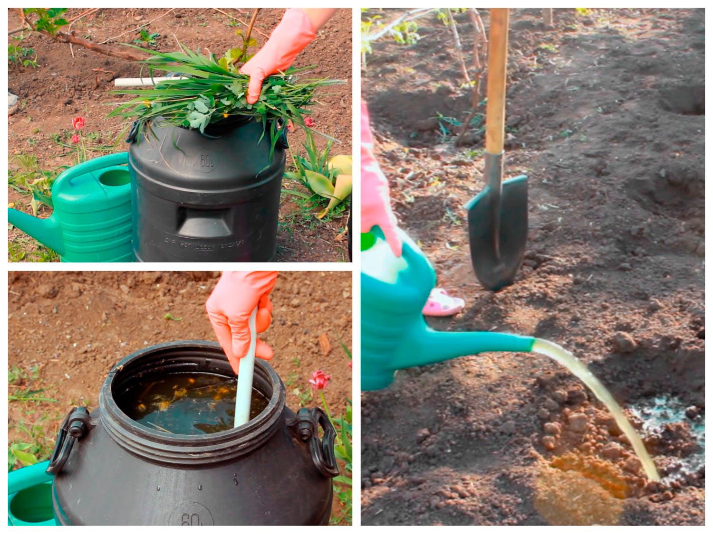 Приготовление зелёного удобрения