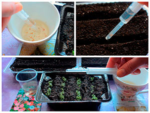 Посев семян земляники и петунии шприцем